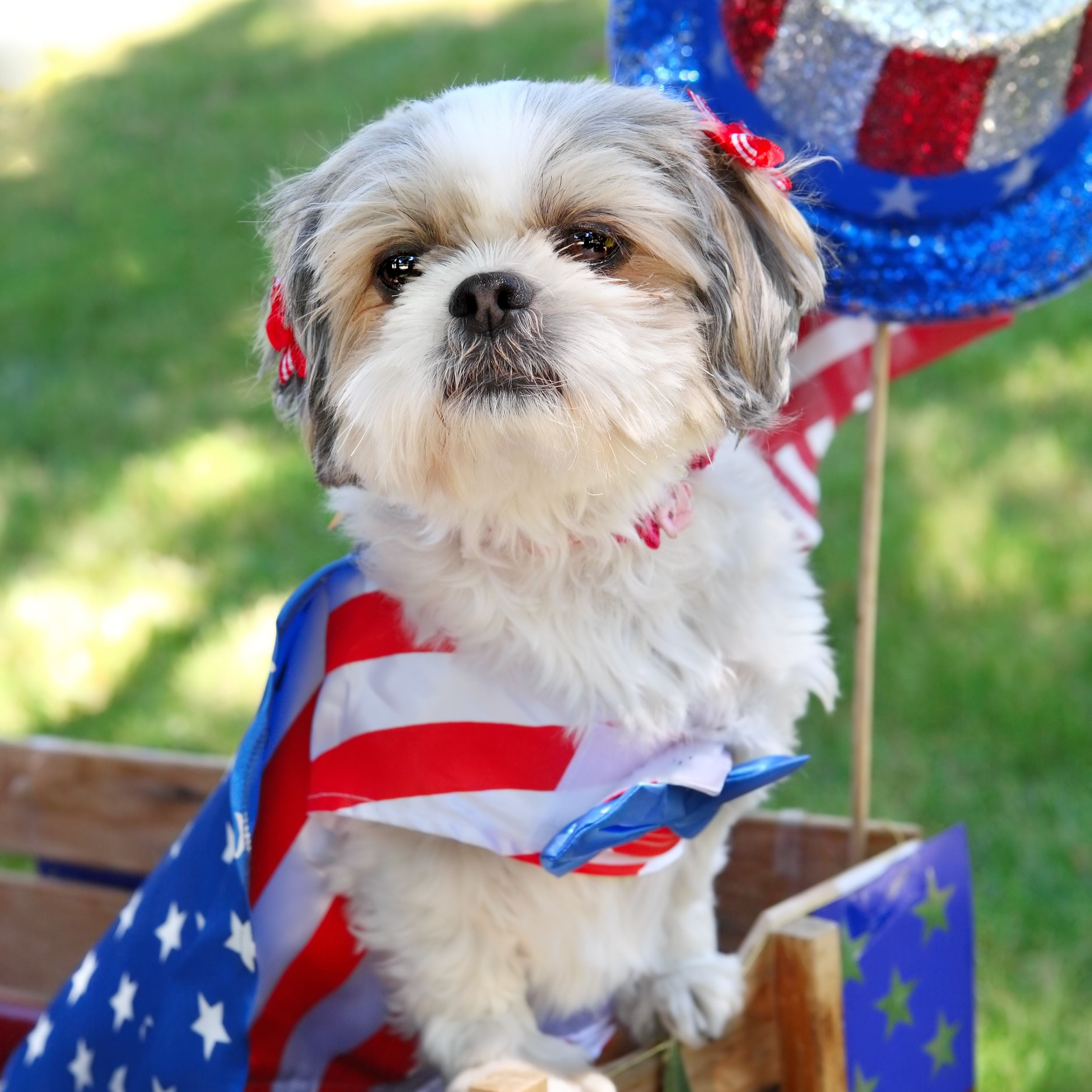 Photo Contest - Patriotic Pet Example